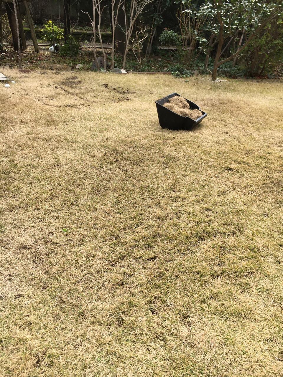 サッチング 芝生